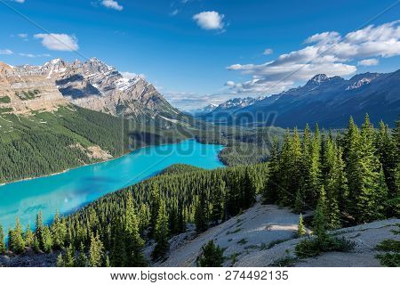 Canada Landscape. The Turquoise Peyto Lake  In Banff National Park, Alberta, Canada.