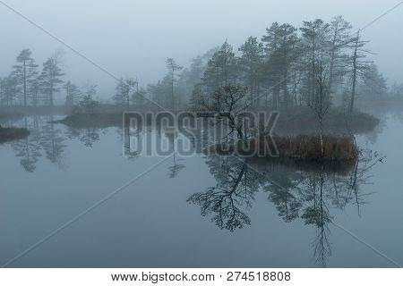 Sunrise In The Bog Landscape. Misty Marsh, Lakes Nature Environment Background