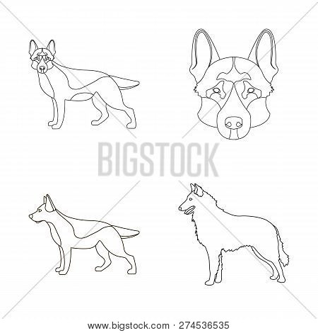 Isolated Object Of  And Sheepdog Symbol. Collection Of  And German Stock Vector Illustration.