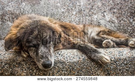 Old Mutt Sleeping Outdoors In A Stone Bench. A Sad And Senior Stray Dog Abandoned In The Streets.