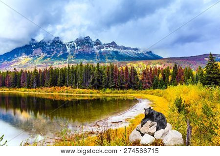 Gorgeous black bear resting on the rocks. The Rocky Mountains, Canada. The valley along the Road 91A -  lake surrounded by scenic forests. Concept of ecological, active and photo-tourism