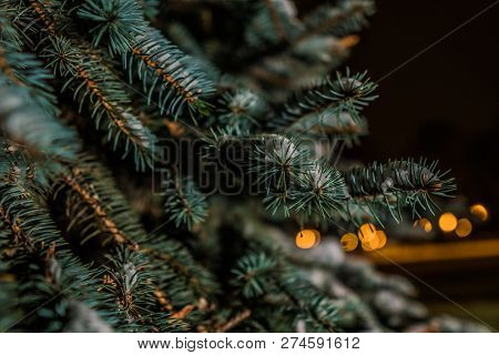 Closeup Conifer Tree With Lights In Bokeh, Christmas