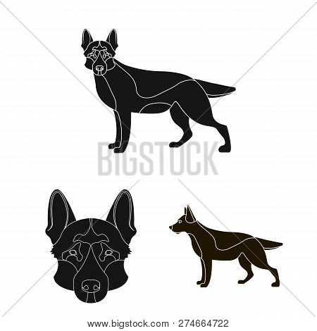 Vector Illustration Of  And Sheepdog Icon. Set Of  And German Vector Icon For Stock.