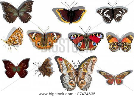 illustration with eleven orange and brown butterflies isolated on white background