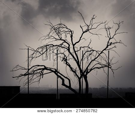 Silhouette Shot Of A Single Tree With Cloudy Sky At The Citadel Of Cairo, Egypt With Skyline In The