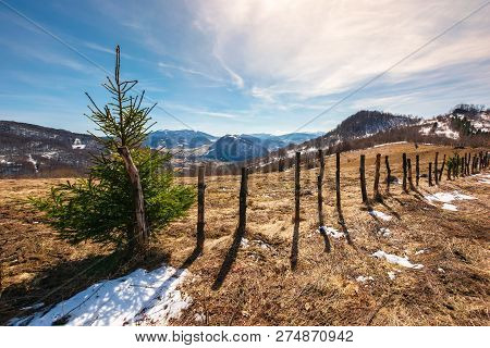 Small Spruce Tree By The Fence On Top Of A Hill. Lovely Mountainous Countryside In Springtime. Leafl