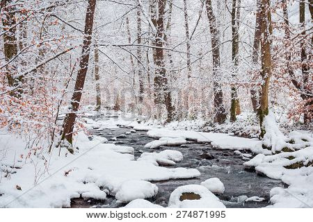 Forest Creek In Winter Forest. Trees With Weathered Foliage Along The Snow Covered Shore. Beautiful
