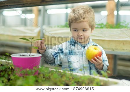 Child Care. Chil Care Of Plants In Greenhouse. Child Care Concept. Care Your Child By Healthy Eating