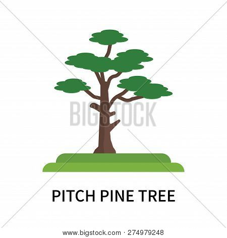Pitch Pine Tree Icon Isolated On White Background. Pitch Pine Tree Icon Simple Sign. Pitch Pine Tree