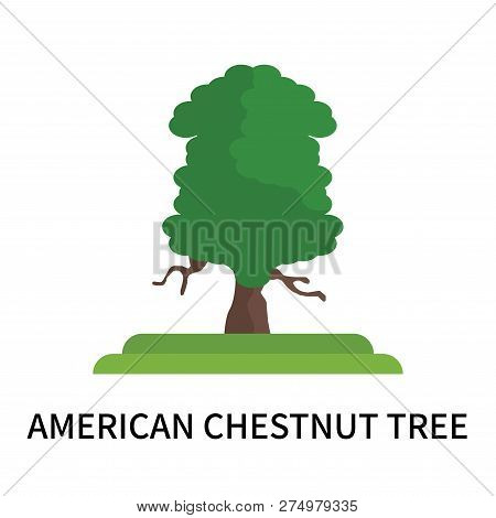 American Chestnut Tree Icon Isolated On White Background. American Chestnut Tree Icon Simple Sign. A