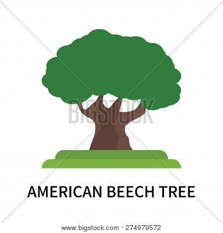 American Beech Tree Icon Isolated On White Background. American Beech Tree Icon Simple Sign. America