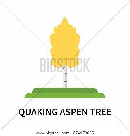 Quaking Aspen Tree Icon Isolated On White Background. Quaking Aspen Tree Icon Simple Sign. Quaking A
