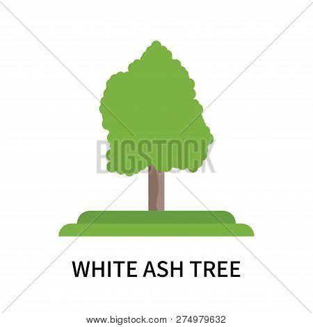 White Ash Tree Icon Isolated On White Background. White Ash Tree Icon Simple Sign. White Ash Tree Ic