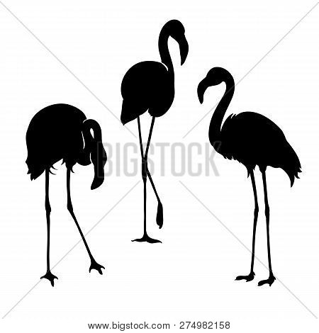 Flamingo Isolated. Exotic Bird. Silhouette Three Flamingo, Decorative Flat Design Element