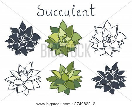 Set Succulent Plant In The Desert Collection. Succulents Flowers, Succulent Isolated. Echeveria Agav