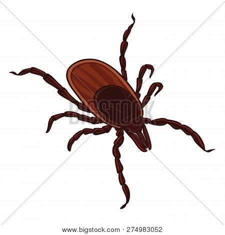 Tick Isolated On White Background. Tick Parasite. Sketch Of Tick. Vector Illustration