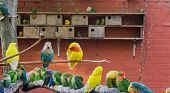 aviculture, a aviary full of colorful parakeets, really close family of birds poster