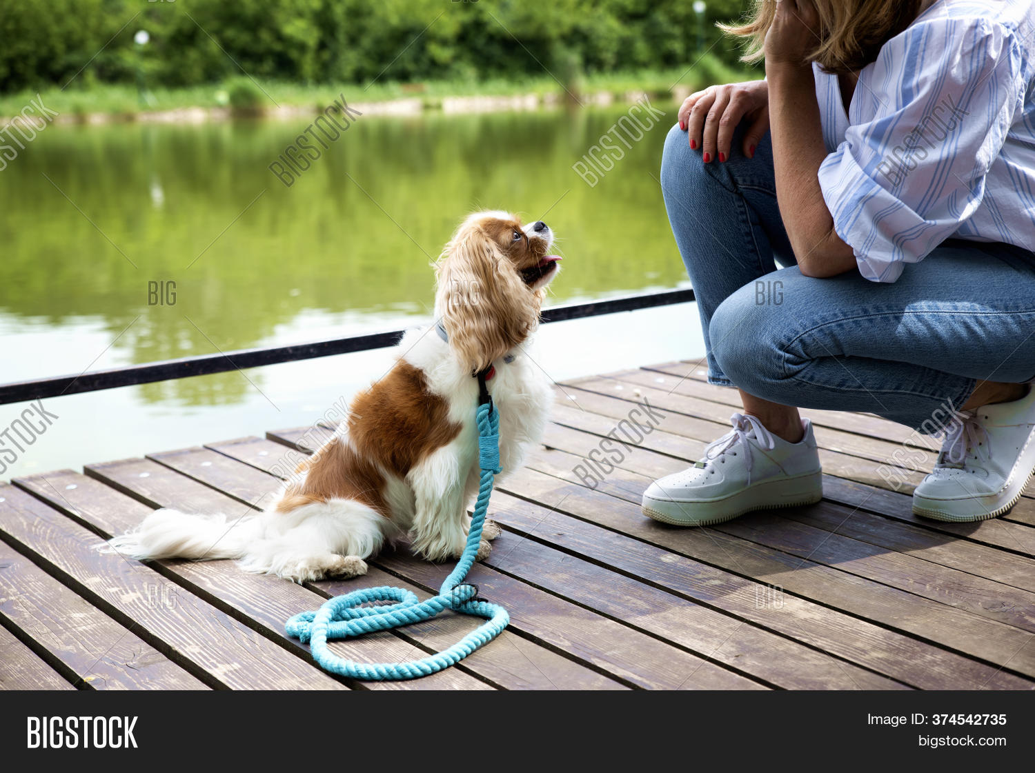 Shot Cute Cavalier Image Photo Free Trial Bigstock
