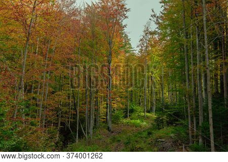 Autumn Forest Wonderland Landscape Nature Photography Of Vivid Fall Season Colors Yellow Brown And G