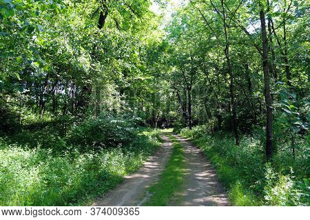 A Single Dirt Road Path Leading Into A Dense Wooded Forest