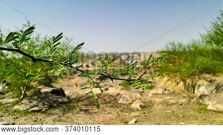 Closeup Of A Branch Of Thorny Bush Or Wild Plant View From Mountain