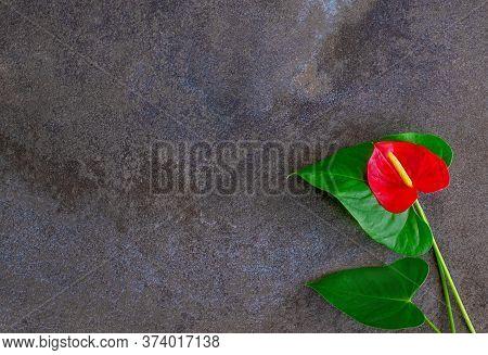 Natural Dark Gray Marble Texture Background With Red Anthurium Flower.