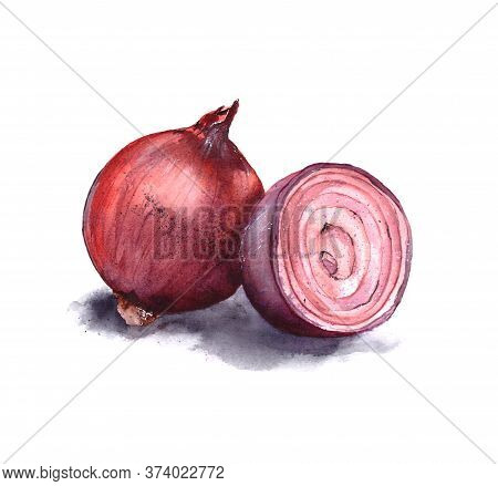 Watercolor Illustration Of Red Onion Whole Onion And Sliced Onion. Isolated On A White Backgrou