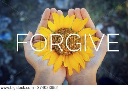 Forgiveness Concept. Single Word, Text Message On Sunflower Blossom In Hand - Forgive. Forgiving Ins