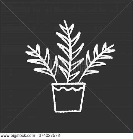 Parlor Palm Chalk White Icon On Black Background. Chamaedorea Elegans. Neanthe Bella Palm. Majesty P