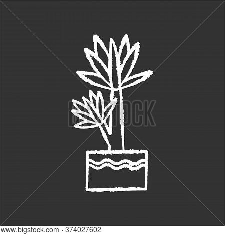 Yucca Chalk White Icon On Black Background. Small Exotic Indoor Palm. Mexican Tree. Decorative House