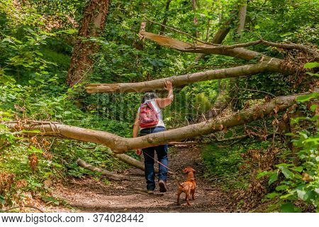 Mature Woman With Her Dog Dodging The Trunks Of The Fallen Trees That Obstruct The Path In The Fores
