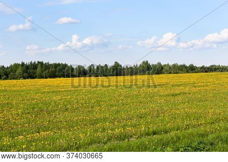 A Large Field Of Yellow Dandelions. Clouds In The Sky Over The Fields.