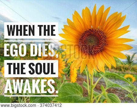 Inspirational Quote - When The Ego Dies, The Soul Awakes. With Beautiful Sunflower  Blossom In Field