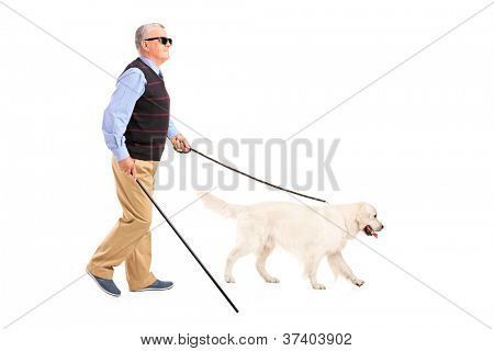 Full length portrait of a blind man moving with walking stick and his dog, isolated on white background poster