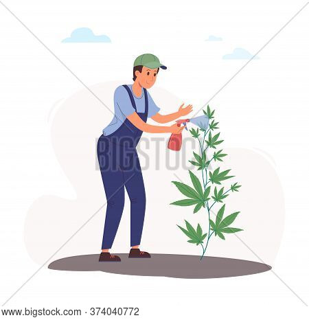 A Worker Sprays A Cannabis Bush From A Spray Bottle With A Solution Of Pests. Vector Illustration Of