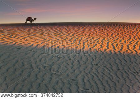 Orange sunrise in the desert. Sleek camel, decorated with colorful garlands and tassels, stands on the crest of a sand dune. Concept of active, ecological and photo tourism