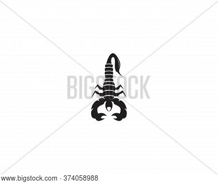 Scorpion Icon And Symbol Vector Illustration On White Background