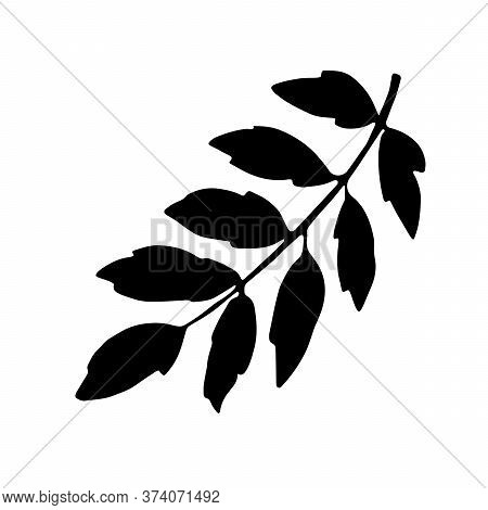 Rowan Branch With Leaves, Freehand Drawing, Nature Element, Black Silhouette. Vector Hand Drawn Illu
