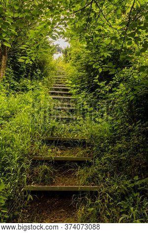 Wooden Steps Up Hillside Of Lush Vegetation In Mountainous Wilderness Park.