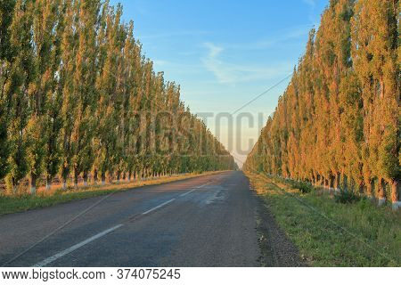 Photo Taken In Ukraine. The Picture Shows An Asphalt Road With Pyramidal Poplars On Both Sides, At S