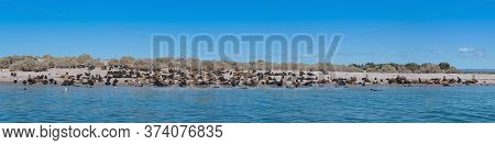 Sea Lion Colony With Young Animals On An Island, Patagonia, Argentina