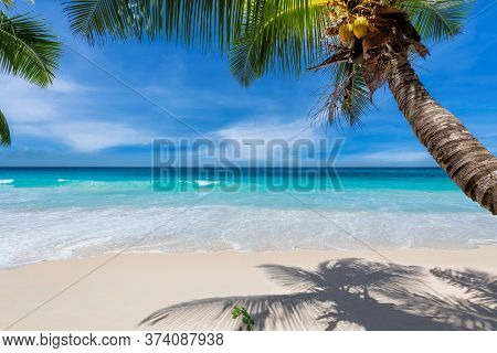 Caribbean Beach. Sunny Beach With Palm And Turquoise Sea. Summer Vacation And Tropical Beach Concept