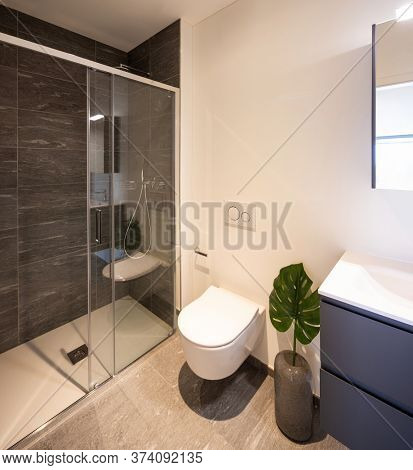 Interior of a bathroom, with shower and a leaf of a green plant.