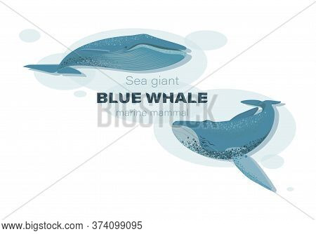 Blue Whales Underwater. Sketch. Vector Illustration With Splash Texture. Marine Mammals. Design For