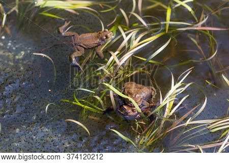 Pond With Toads