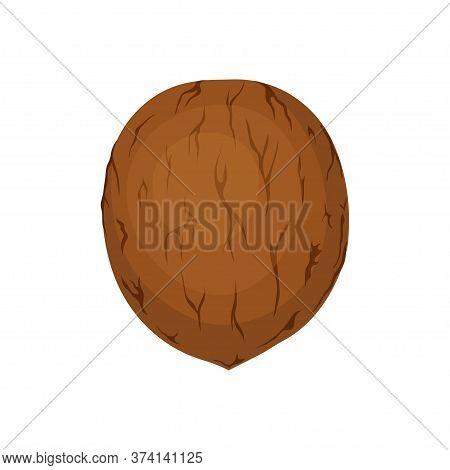 Vector Illustration Of Walnut Fruit Isolated On White Background