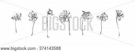 Set Of Hand Drawn Anemone Flowers. Outline Floral Ink Painting Collection. Black Isolated Sketch Vec