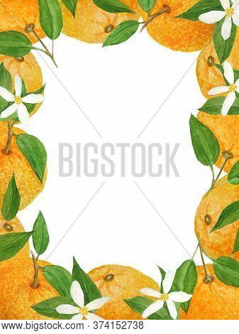 Watercolor Hand Drawn Page Frame Border Illustration Of Bright Orange Tangerine Mandarine Citrus Fru