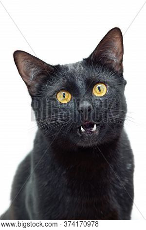 Portrait Of A Black Cat With His Mouth Ajar Against A Light Background