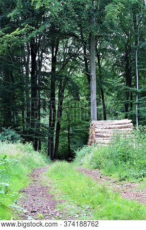 Natural Path In The Forest With Grass On The Median And Stack Of Wood At One Side